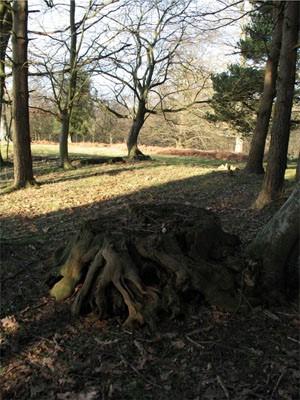 Lesní oltář, Foto: Walerien, Č.P.S