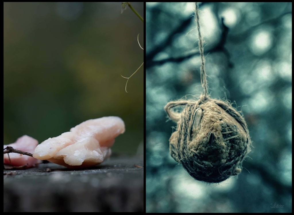 Obětování Ódinovi a Freyje prostřednictvím lesního ptactva, havrani a sýkorky