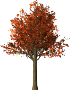 tree-1544723_1280