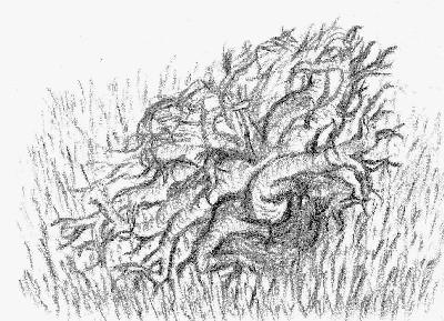 Ilustrace 2 - Lipien